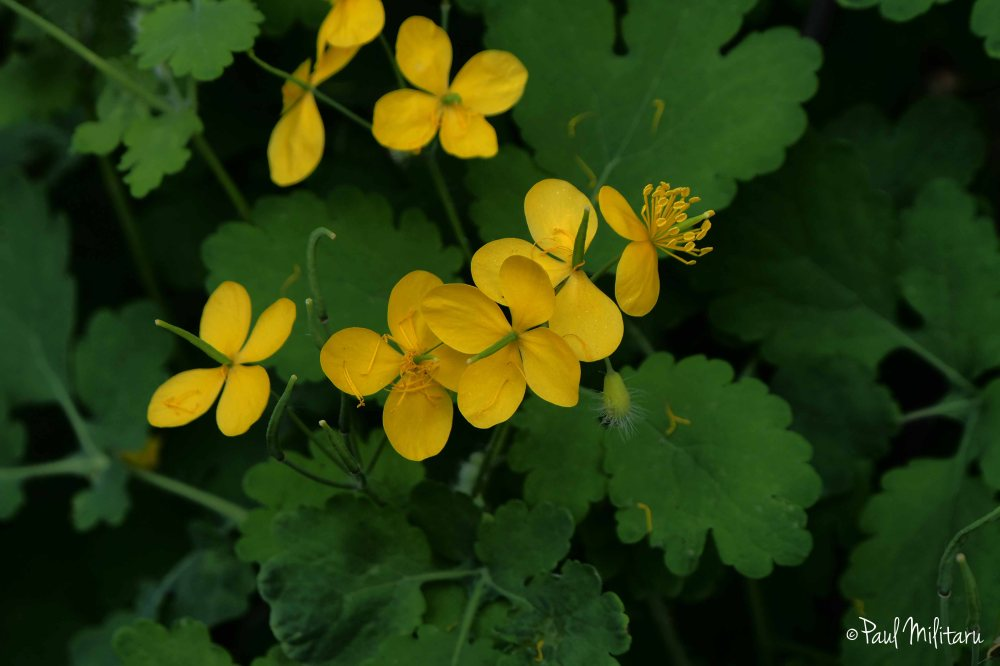 yellow wild little flowers