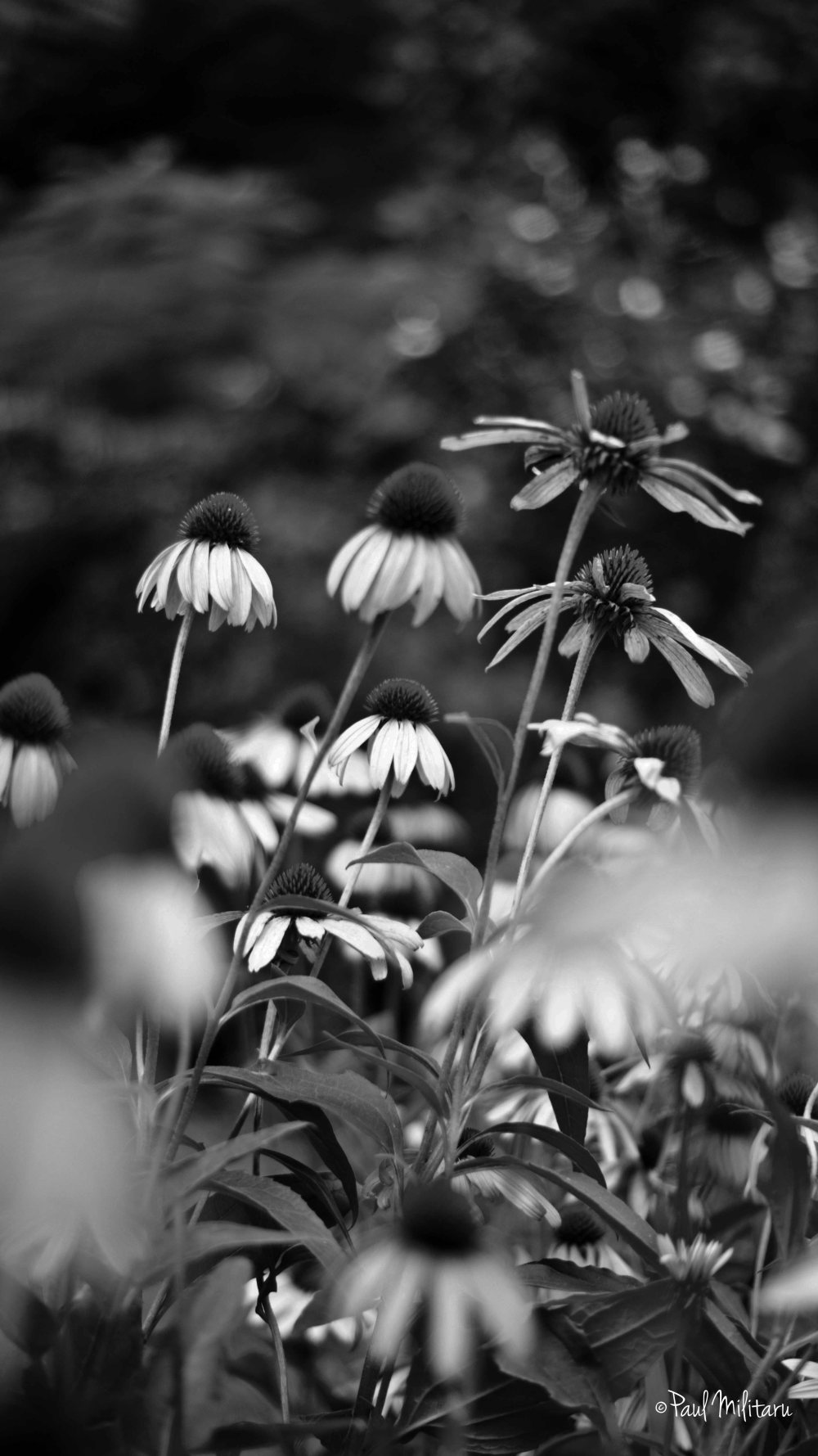 floral perspective in black and white