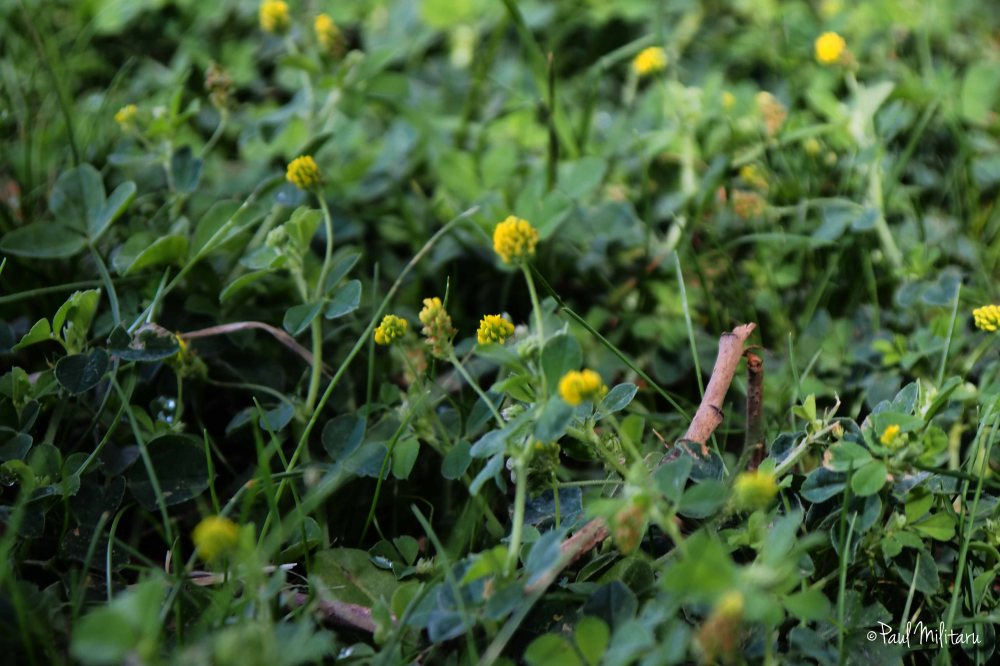 grass and little yellow flowers