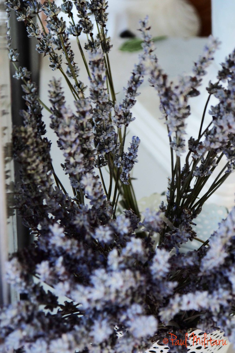 lavender for floral decorations